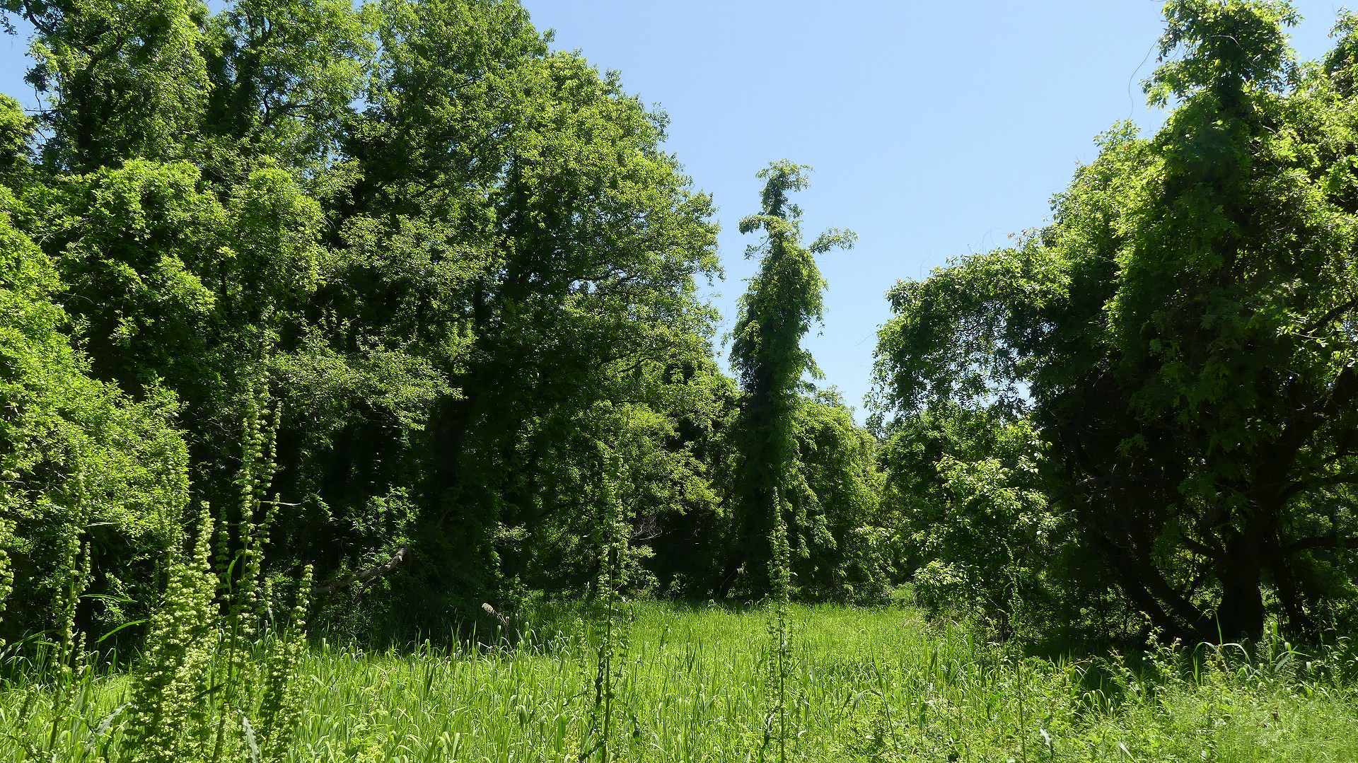 癒やしの森に包まれて_a0185081_09393285.jpg