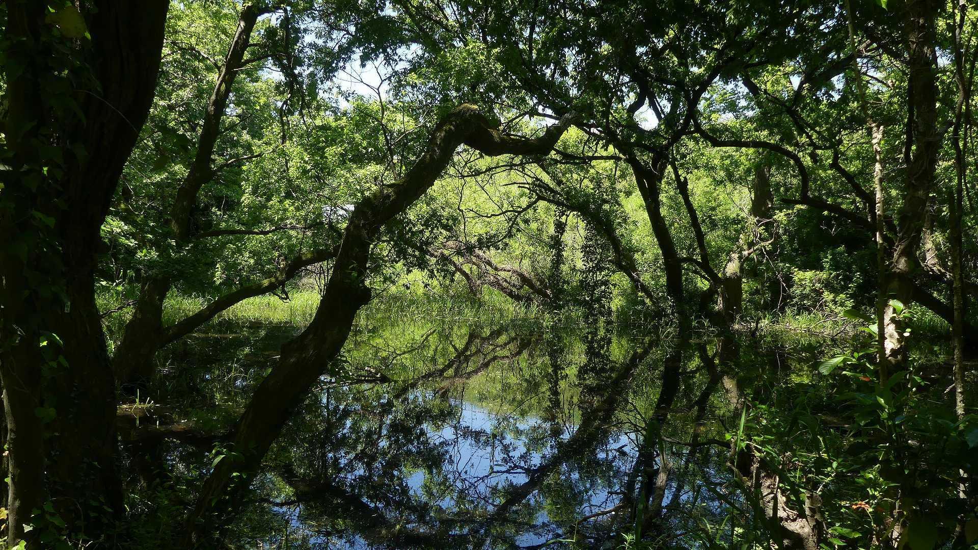 癒やしの森に包まれて_a0185081_09401732.jpg