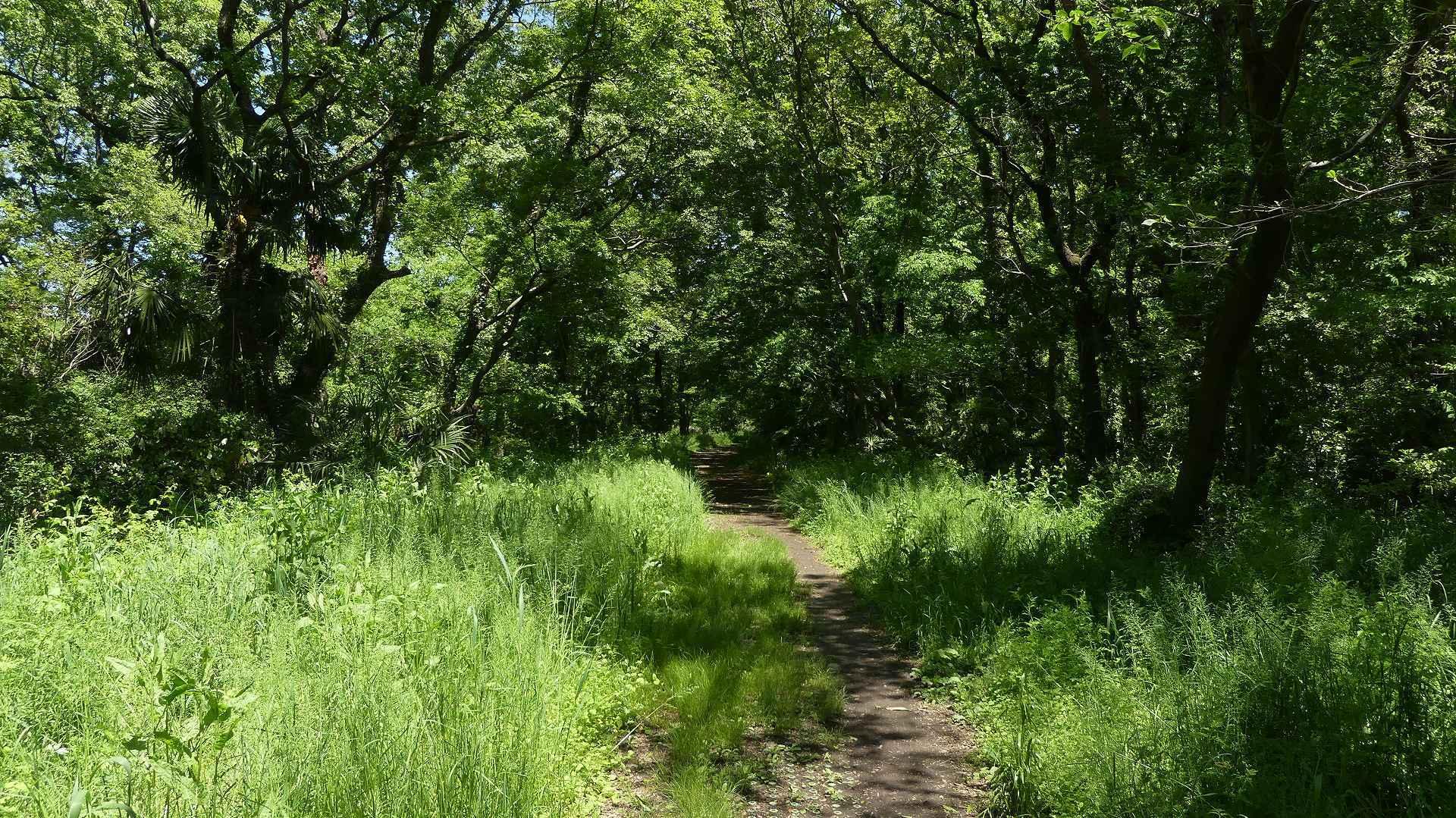 癒やしの森に包まれて_a0185081_09423345.jpg