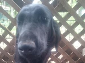 犬は大らかに育てよう!⑪_b0084194_17134399.jpg