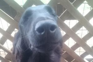 犬は大らかに育てよう!⑪_b0084194_17140970.jpg