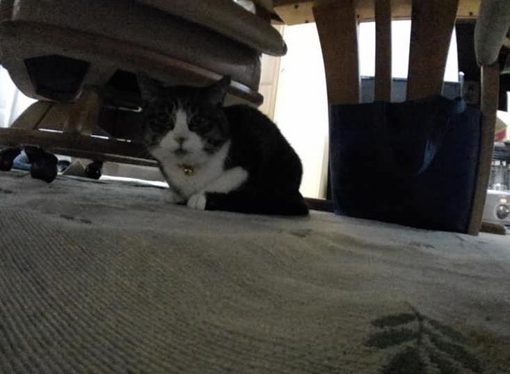 【猫】想定外な・・・・_f0141609_21575450.jpg