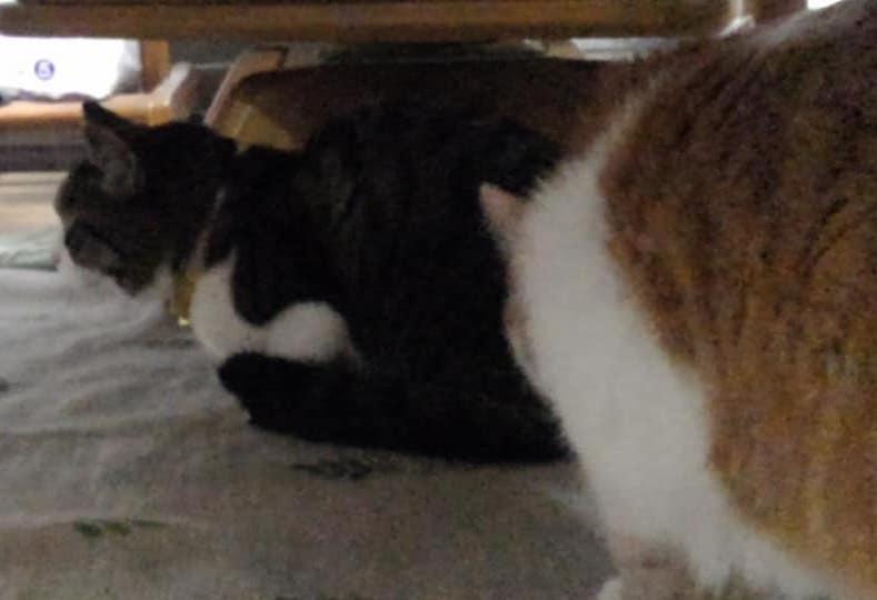 【猫】想定外な・・・・_f0141609_21575514.jpg