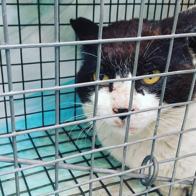TNRと意識のない猫、お願い_b0235714_11521820.jpg