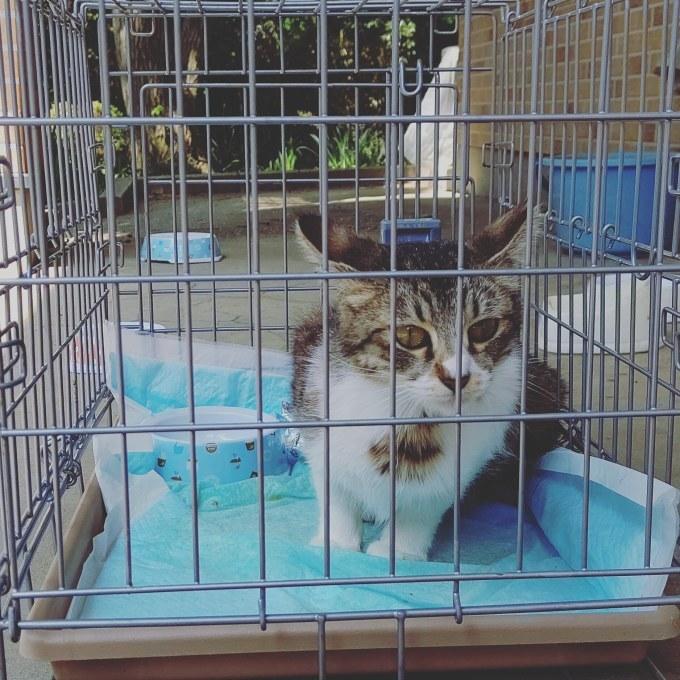 TNRと意識のない猫、お願い_b0235714_11523672.jpg