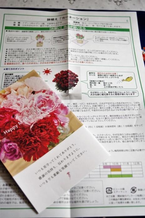 ■母の日で【新宿在住の娘夫婦からは 絞り咲きのカーネーションの鉢植えが届きました♪豪華絢爛!】_b0033423_21111733.jpg