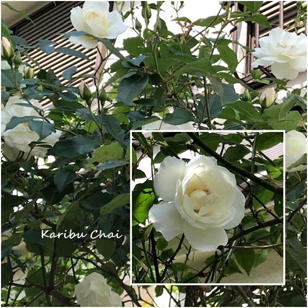新緑と花々の美しい5月ですね…_c0079828_17102427.jpg