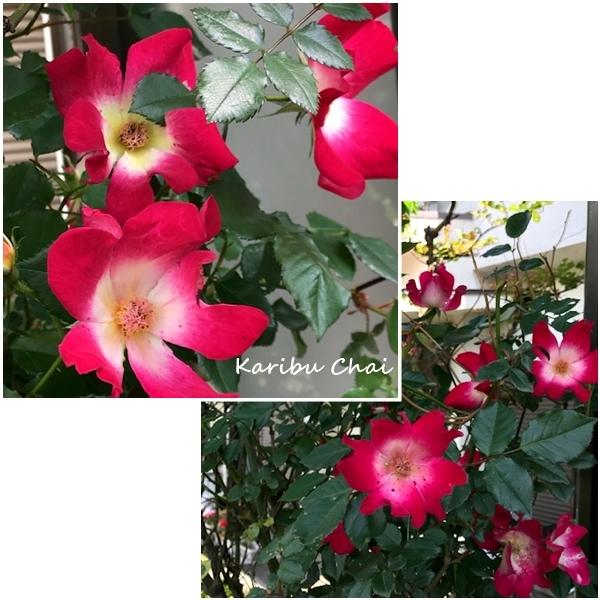 新緑と花々の美しい5月ですね…_c0079828_17115772.jpg