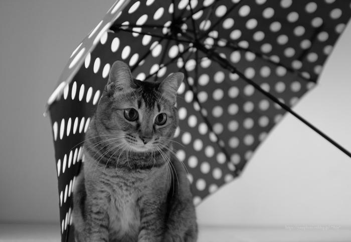 猫がいる暮らし - 27 -_e0347431_14403274.jpg