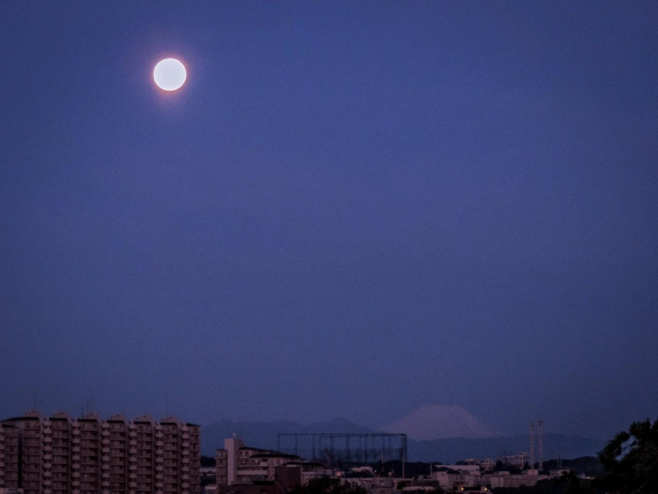 2020.5.8薄雲越しのパール富士(調布市五本松公園)_e0321032_1034518.jpg