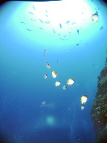 5月10日ついに沖縄、感染者0!!10日間達成~_c0070933_22294301.jpg