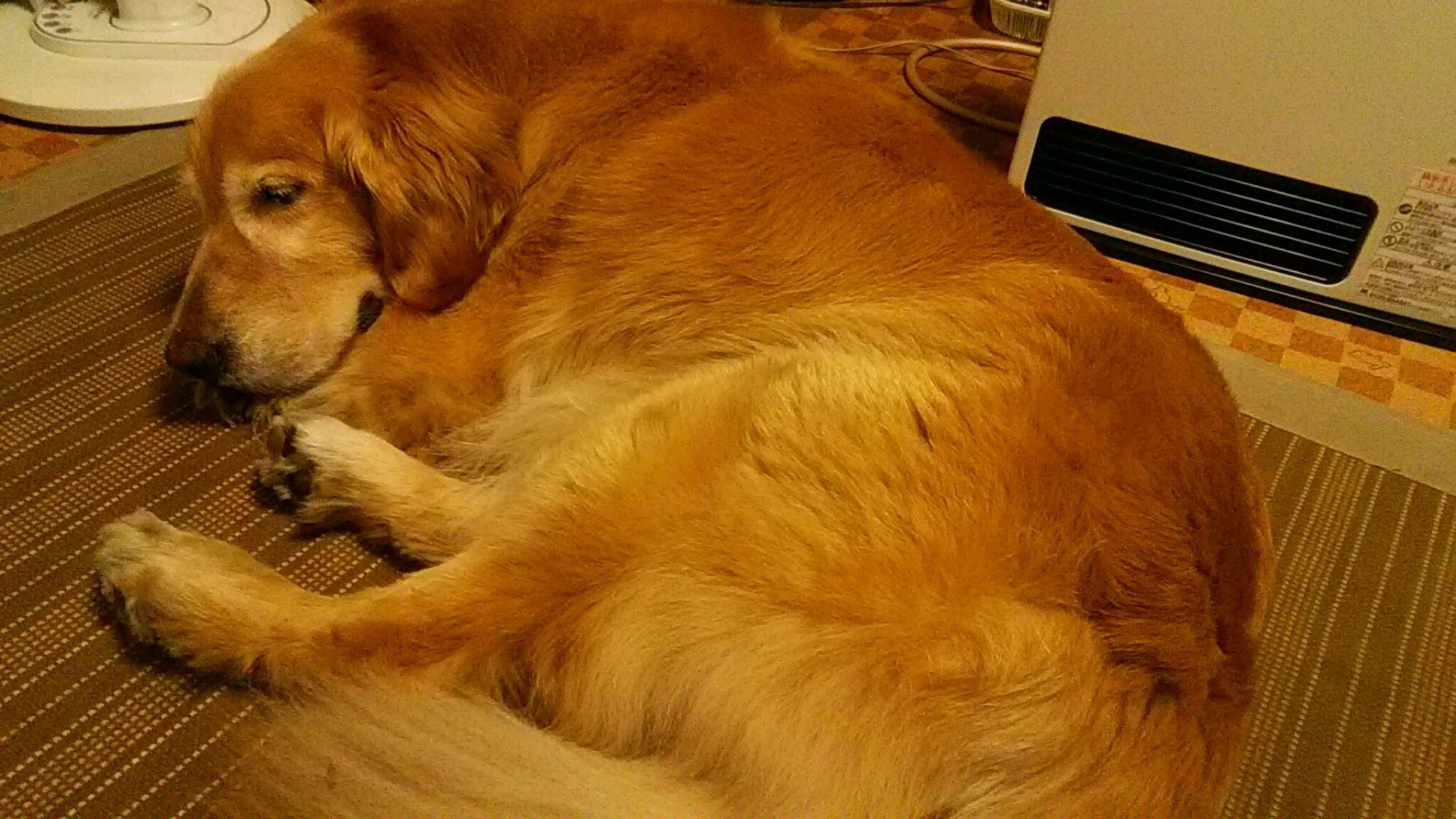 アンディの寝顔_b0077451_11280137.jpg