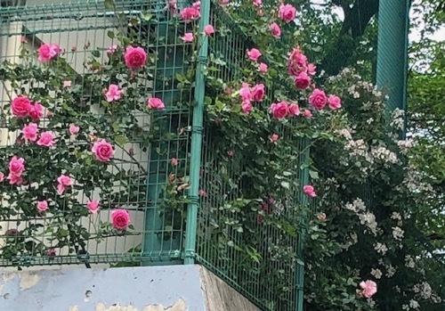 駒場小学校のフェンスに_a0094959_17091361.jpg
