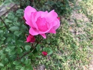 靭公園の空気。薔薇とクレープと友情と。_a0050302_16473614.jpg