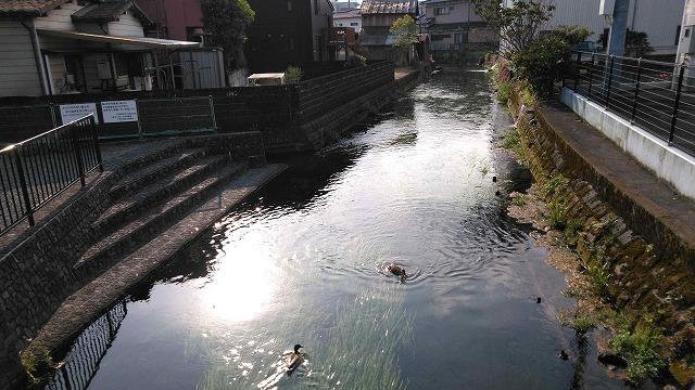 朝の散歩  東泉院、せぎわく、田宿川、善得寺等を回る今泉の歴史コース_f0141310_07511146.jpg