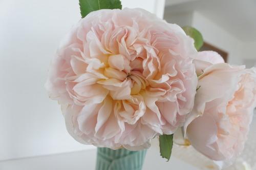 【バラのお花】_f0215714_18405562.jpg