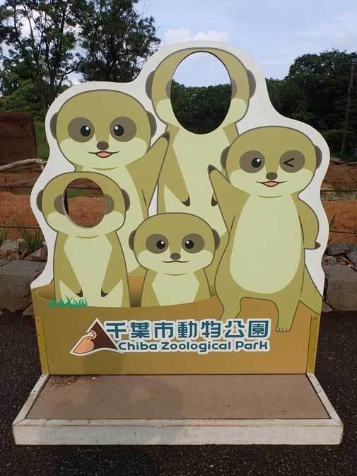 めっちゃ見てくるミーアキャットとライオン男子「アレン&トウヤ」(千葉市動物公園 June 2019)_b0355317_21585976.jpg