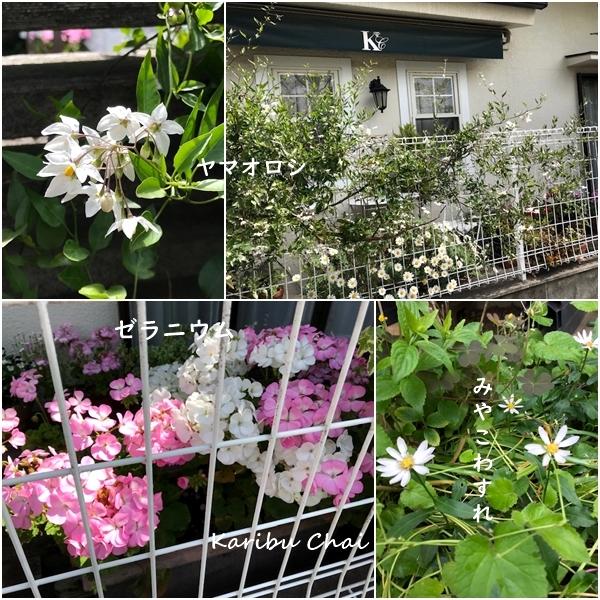 新緑と花々の美しい5月ですね…_c0079828_23315650.jpg