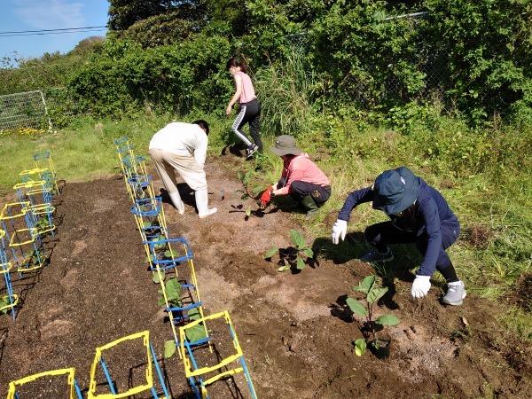 野菜苗の植え替えをしました_a0131631_19034976.jpg