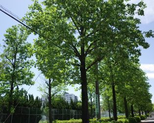 鶴舞公園の華_c0021551_19544635.jpg
