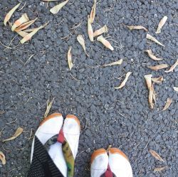鶴舞公園の華_c0021551_19545501.jpg
