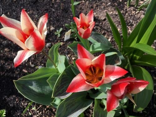 エゾヤマザクラを愛でやっと春_e0326953_17471887.jpg