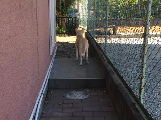 庭に行きたがる_a0230369_14142000.jpg
