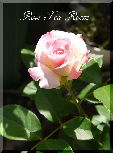 癒やし空間! バラの便り~♪_a0159974_7313769.jpg