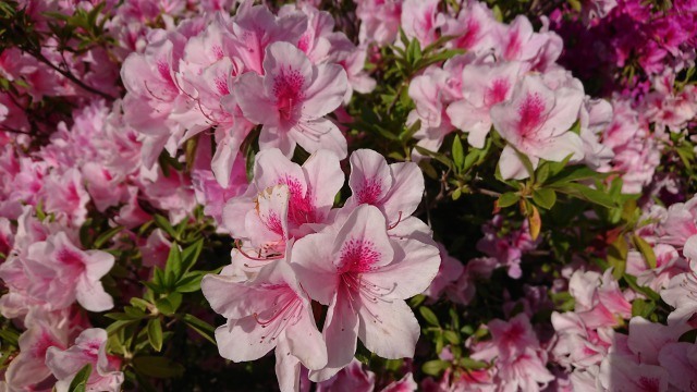 新宝緑地の花の紹介_d0338682_13313715.jpg