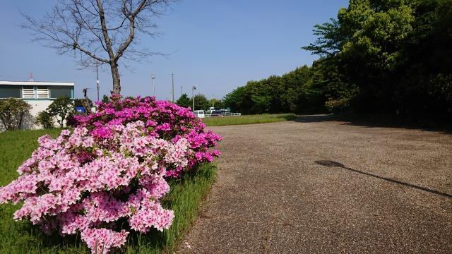 新宝緑地の花の紹介_d0338682_13315758.jpg