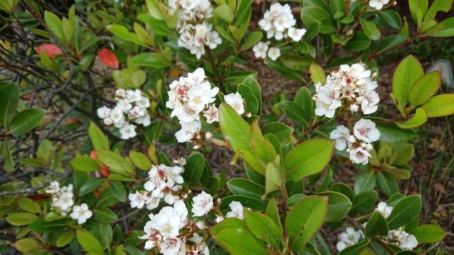 新宝緑地の花の紹介_d0338682_13321813.jpg