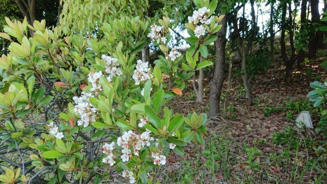 新宝緑地の花の紹介_d0338682_13325722.jpg