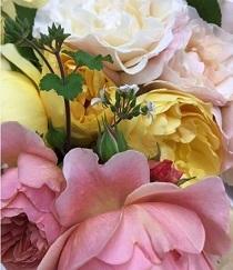 美しい薔薇をいただきました_e0129308_15391068.jpg