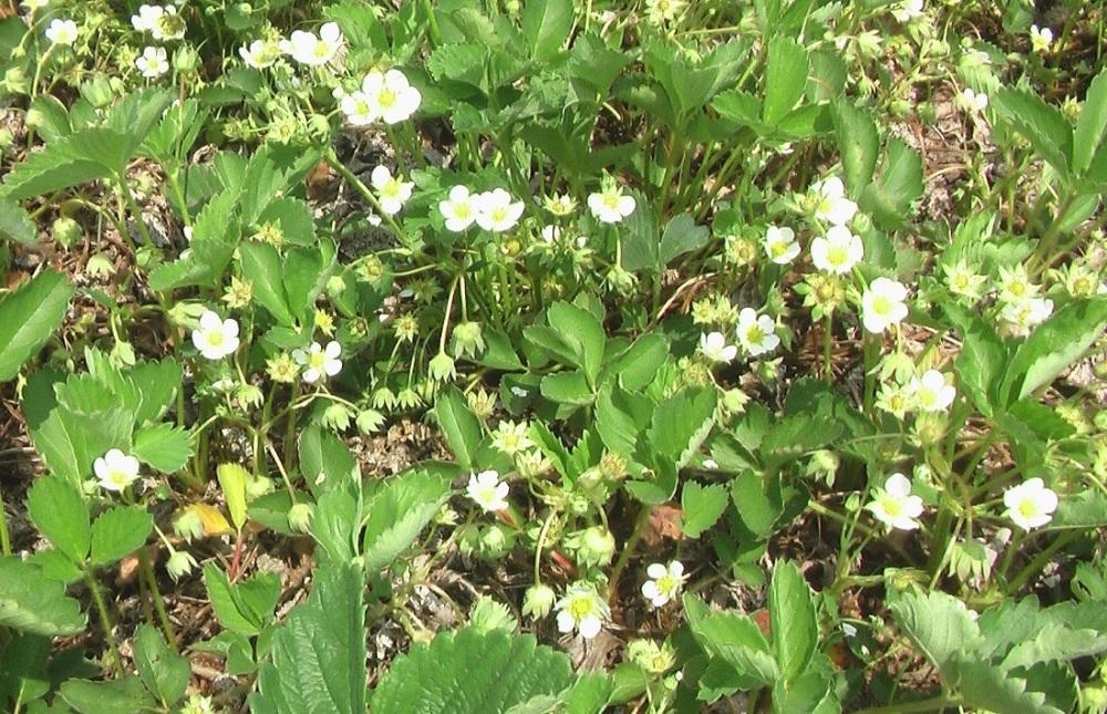 野菜の苗 植えました。_c0335218_15321525.jpg