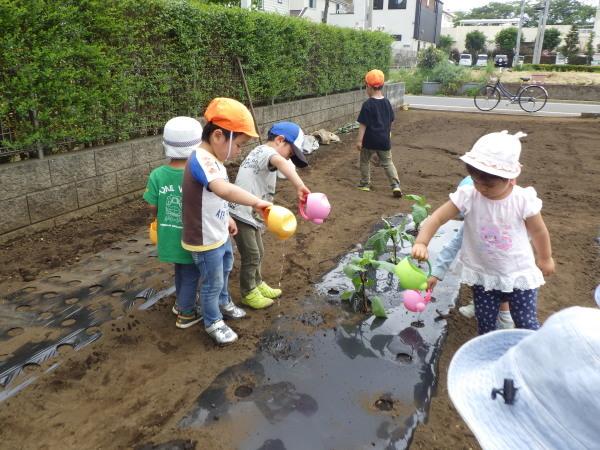 野菜植え_e0319922_14470752.jpg