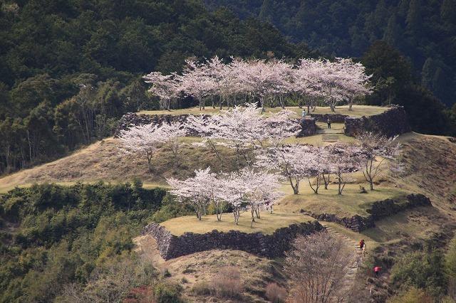 赤木城跡の桜満開(その1)(撮影:4月7日)_e0321325_19190779.jpg