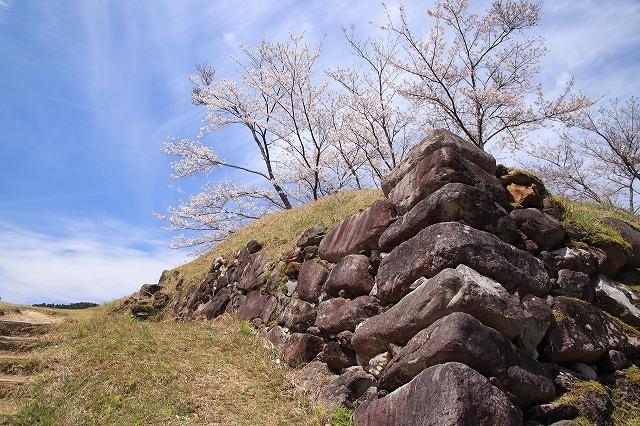 赤木城跡の桜満開(その1)(撮影:4月7日)_e0321325_19202623.jpg