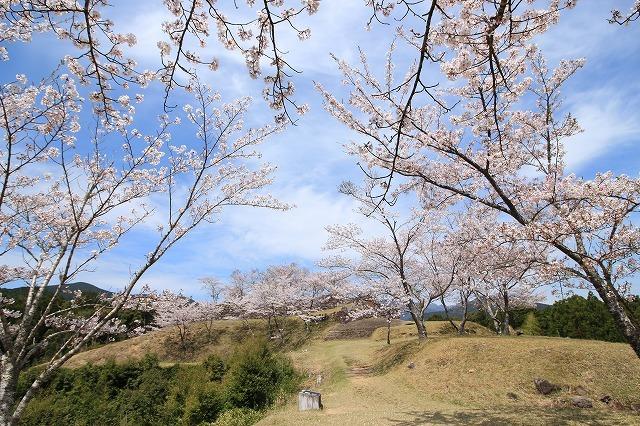 赤木城跡の桜満開(その1)(撮影:4月7日)_e0321325_19204083.jpg