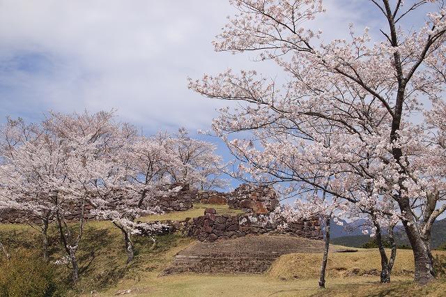 赤木城跡の桜満開(その1)(撮影:4月7日)_e0321325_19205709.jpg