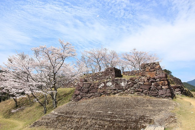 赤木城跡の桜満開(その1)(撮影:4月7日)_e0321325_19212552.jpg