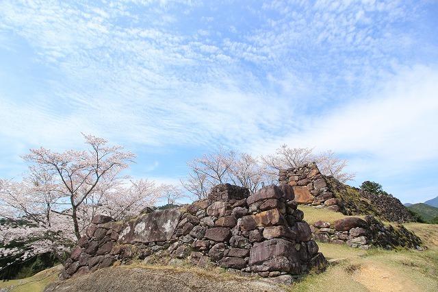 赤木城跡の桜満開(その1)(撮影:4月7日)_e0321325_19214023.jpg