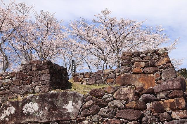 赤木城跡の桜満開(その1)(撮影:4月7日)_e0321325_19230217.jpg