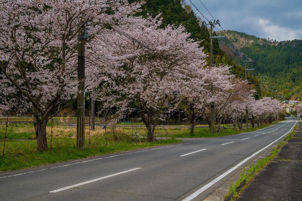 2020京都桜~京都のどこか_e0363038_15182772.jpg