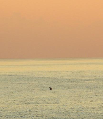 2020年鯨レポート 屋久島  ザトウクジラ_b0160957_17320309.jpg