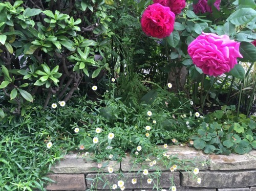 オススメの植物たち/Hさんのお庭から_a0094959_19195870.jpg