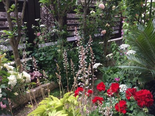オススメの植物たち/Hさんのお庭から_a0094959_19200616.jpg
