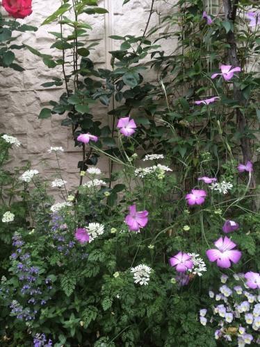 オススメの植物たち/Hさんのお庭から_a0094959_19201180.jpg
