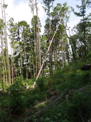 山桜の植樹念頭にチェンソーで台風被害木を処理5・12_c0014967_16320885.jpg