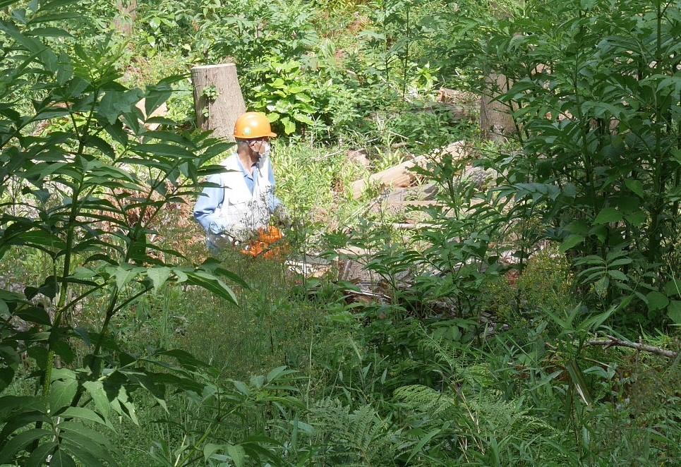 山桜の植樹念頭にチェンソーで台風被害木を処理5・12_c0014967_16322591.jpg