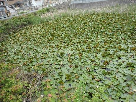 スイレンの池は町の中_e0175370_21563401.jpg